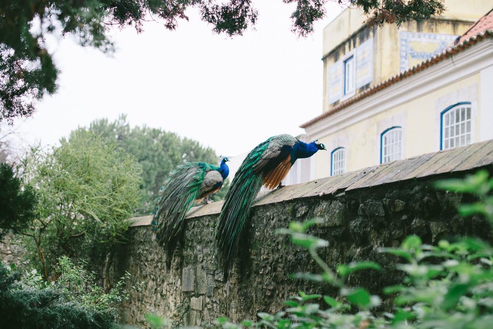 Lisbon-photography-9129.jpg