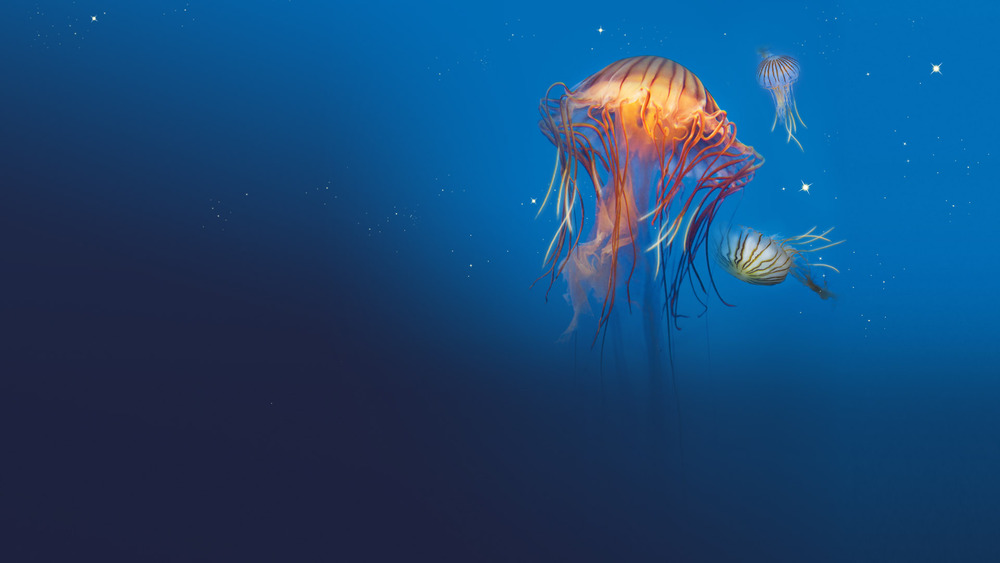 The aquarium at La Rochelle is very much worth a visit.
