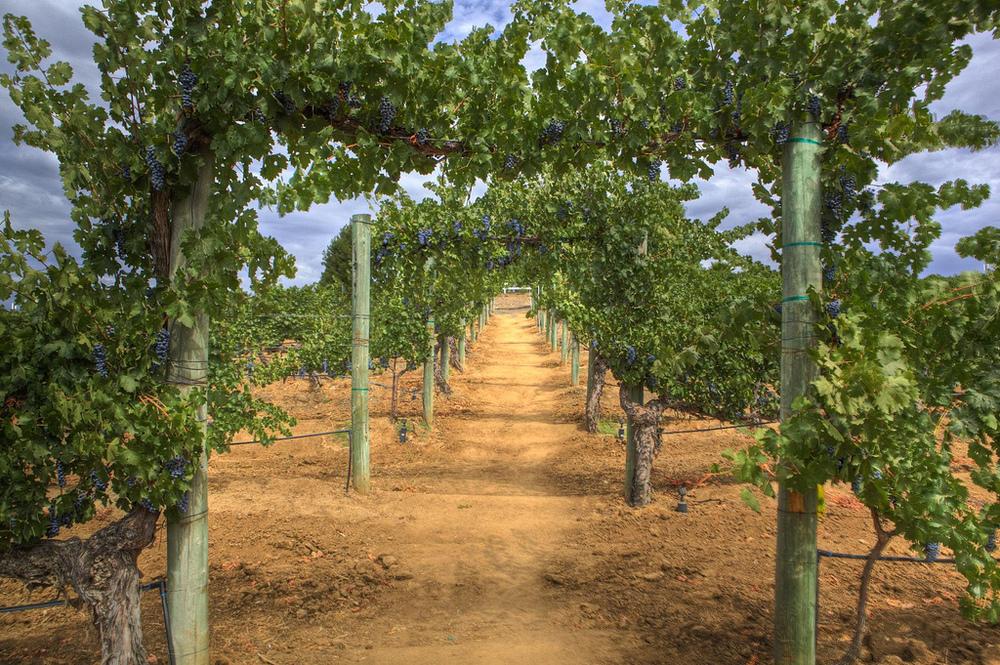Explorez les vignobles de la région de la Vendée. Tout près se trouvent les vignobles de J. Mourat et Mercier