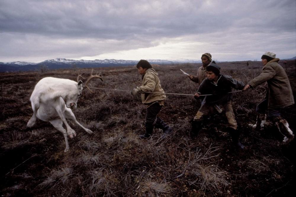 Reindeer hunt