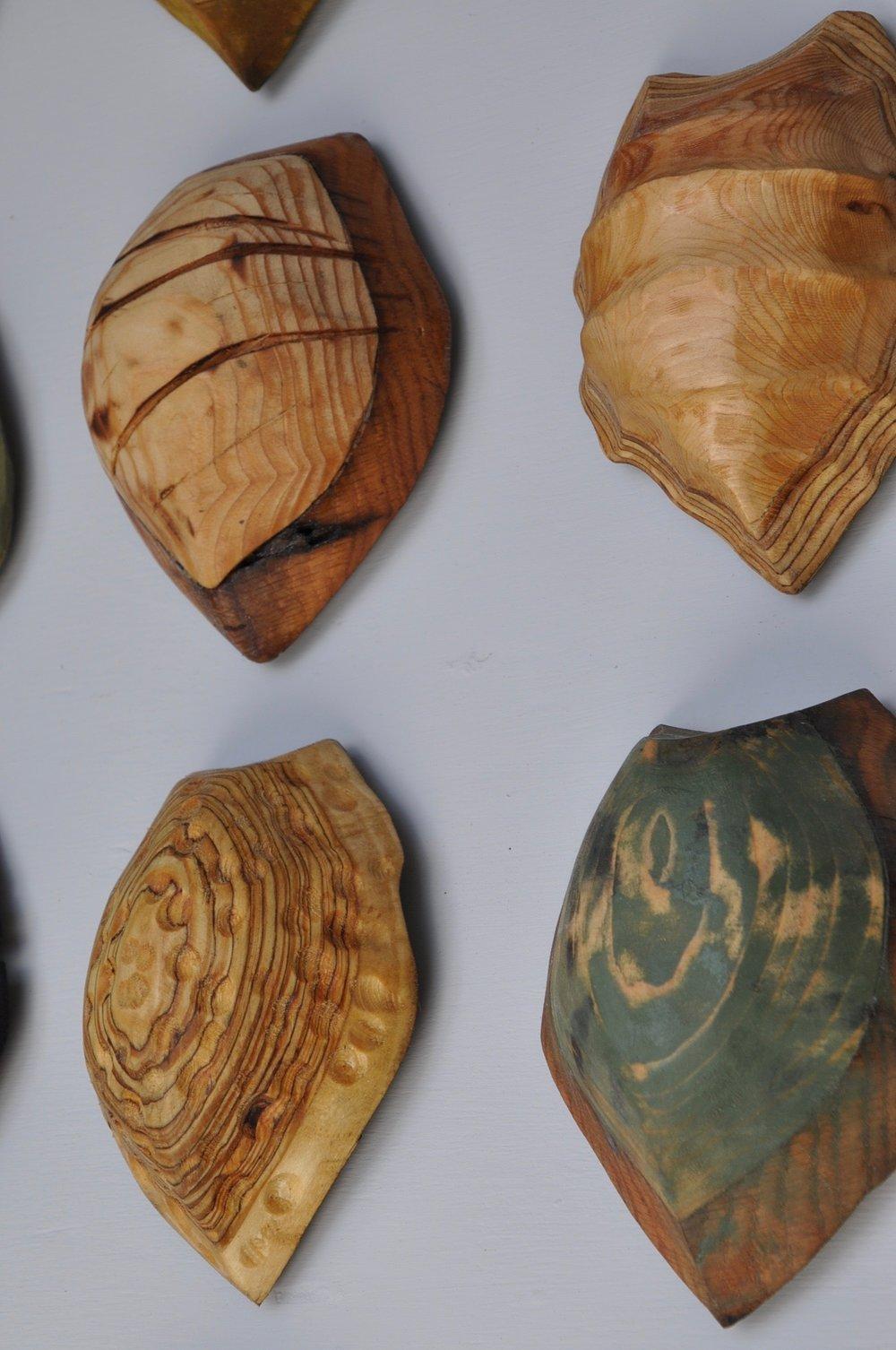 20 Terrapin Shells