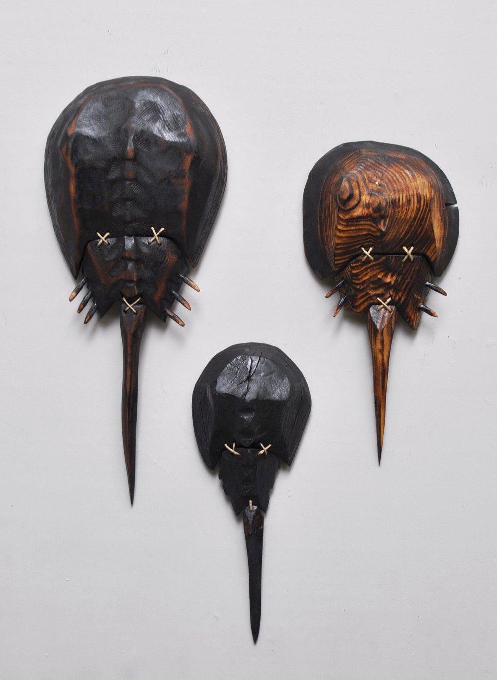 3 Horsehoe Crabs