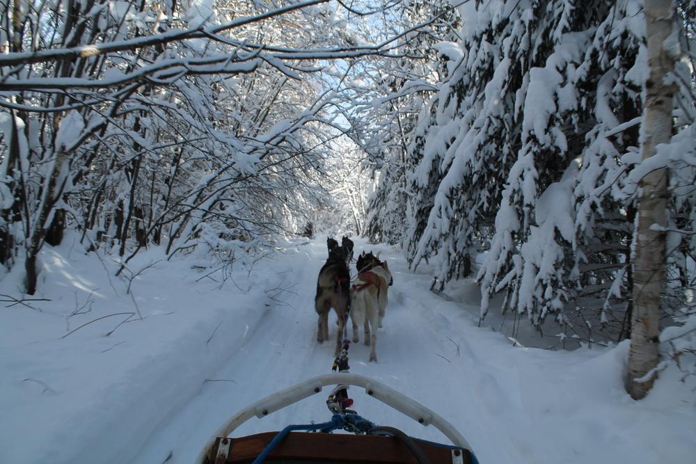 Traineau à chiens dans la Lanaudière, Lac Taureau, Qc