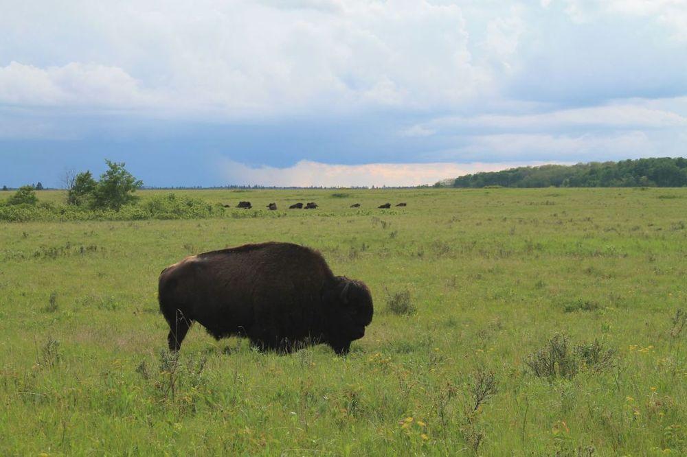 Prairies, Riding Mountain National Park, MB, CA