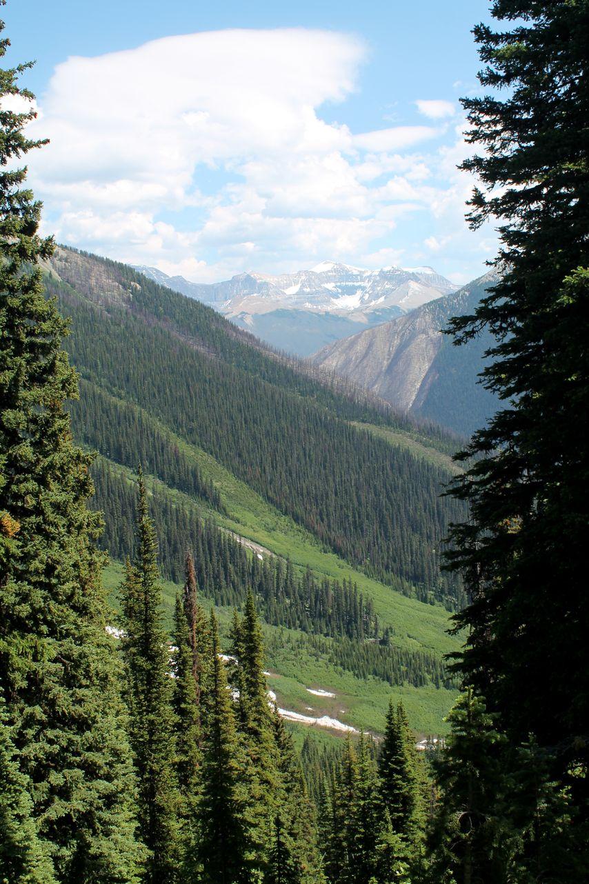 Tumbling Creek Trail, Kootenay National Park, AB, CA