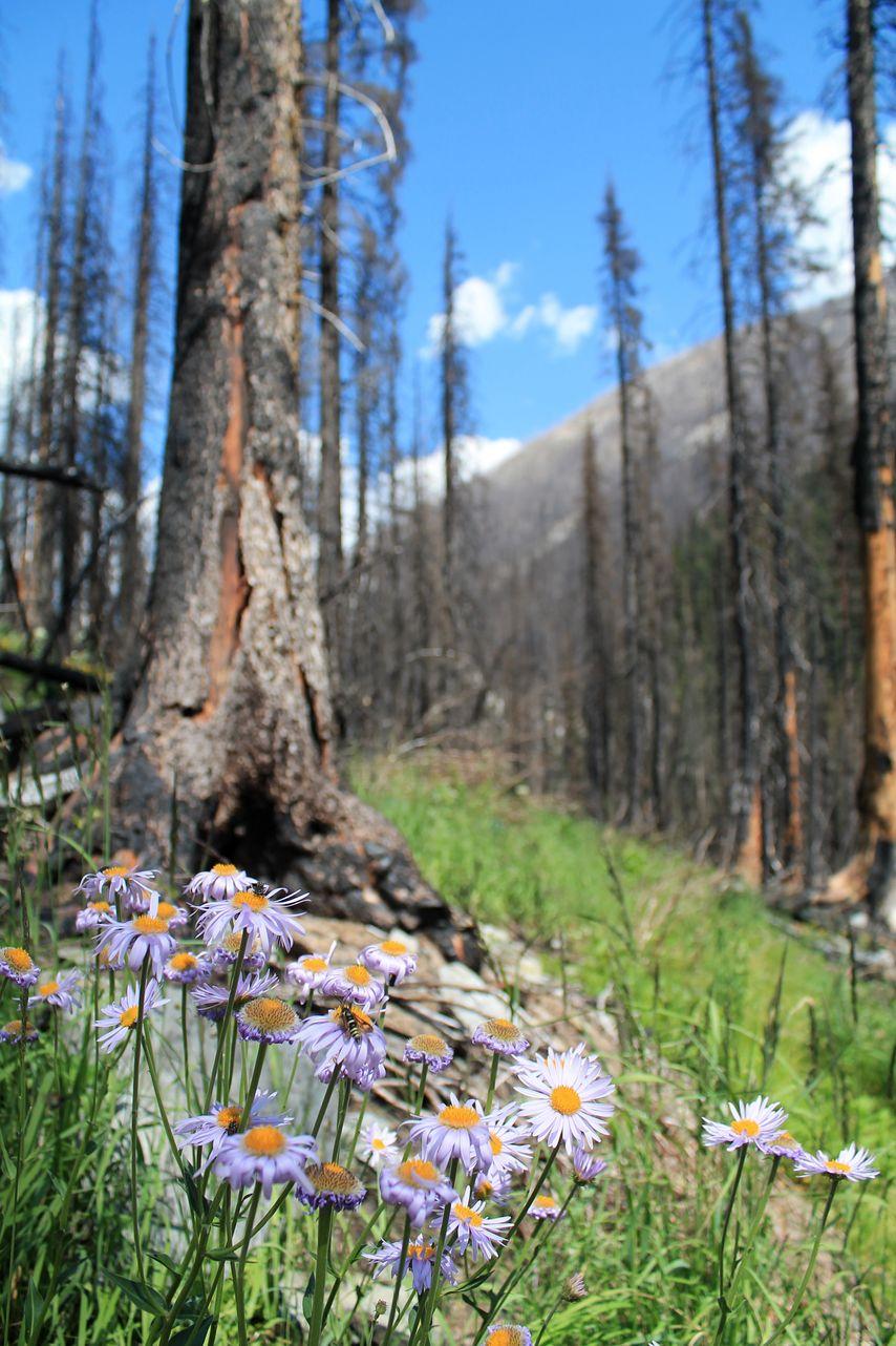 Numa Creek Trail, Kootenay National Park, AB, CA