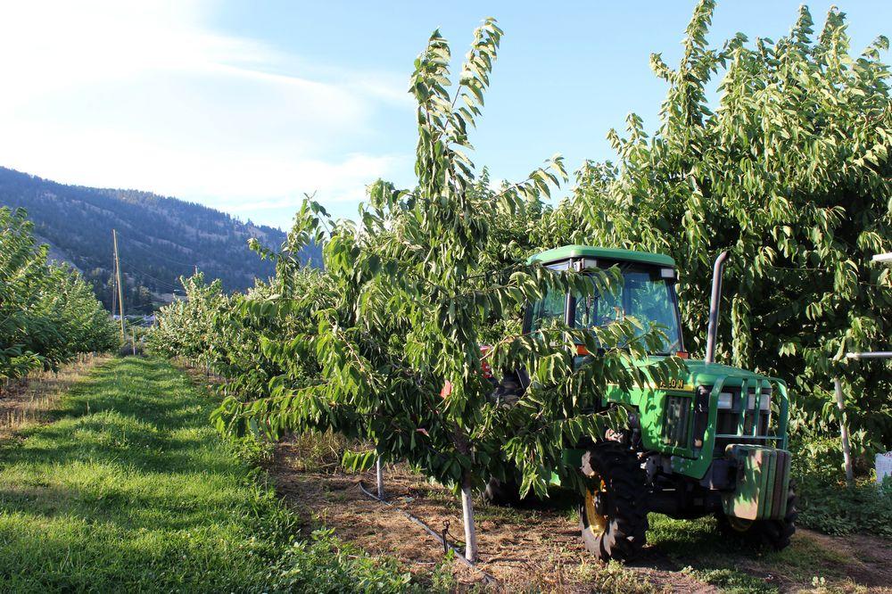 Palomine Orchards, Winfield, Okanagan Valley, BC, CA