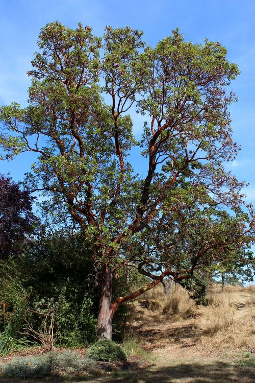 Beacon Hill Park, Victoria, BC, CA