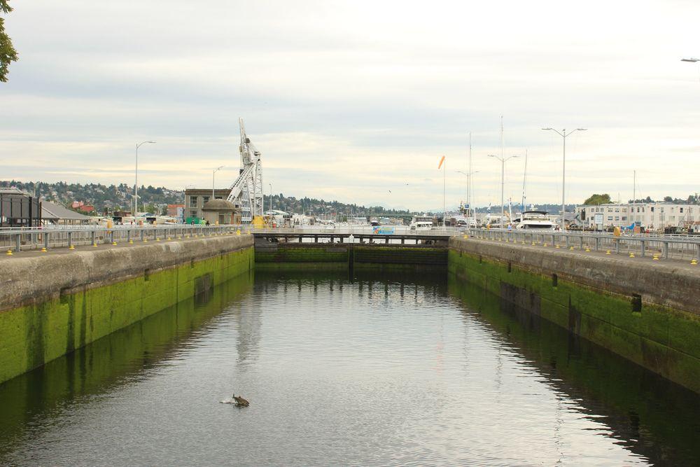 Les ecluses de Ballard avec en prime petit saumon suateur, Seattle, WA, USA