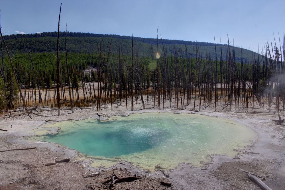 Norris Geyser Basin, Yellowstone National Park, WY, USA