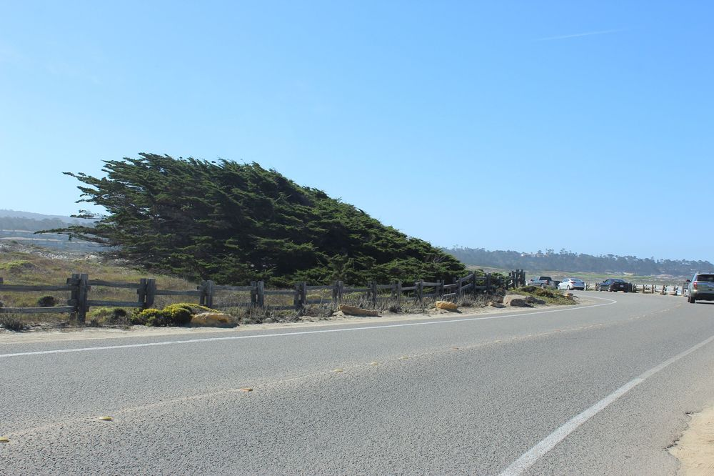 17-Mile Drive, CA, USA