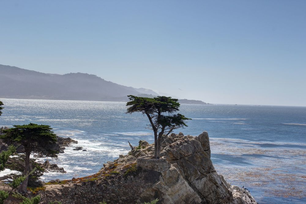 Cypress Tree, Big Sur, Route 1, CA, USA