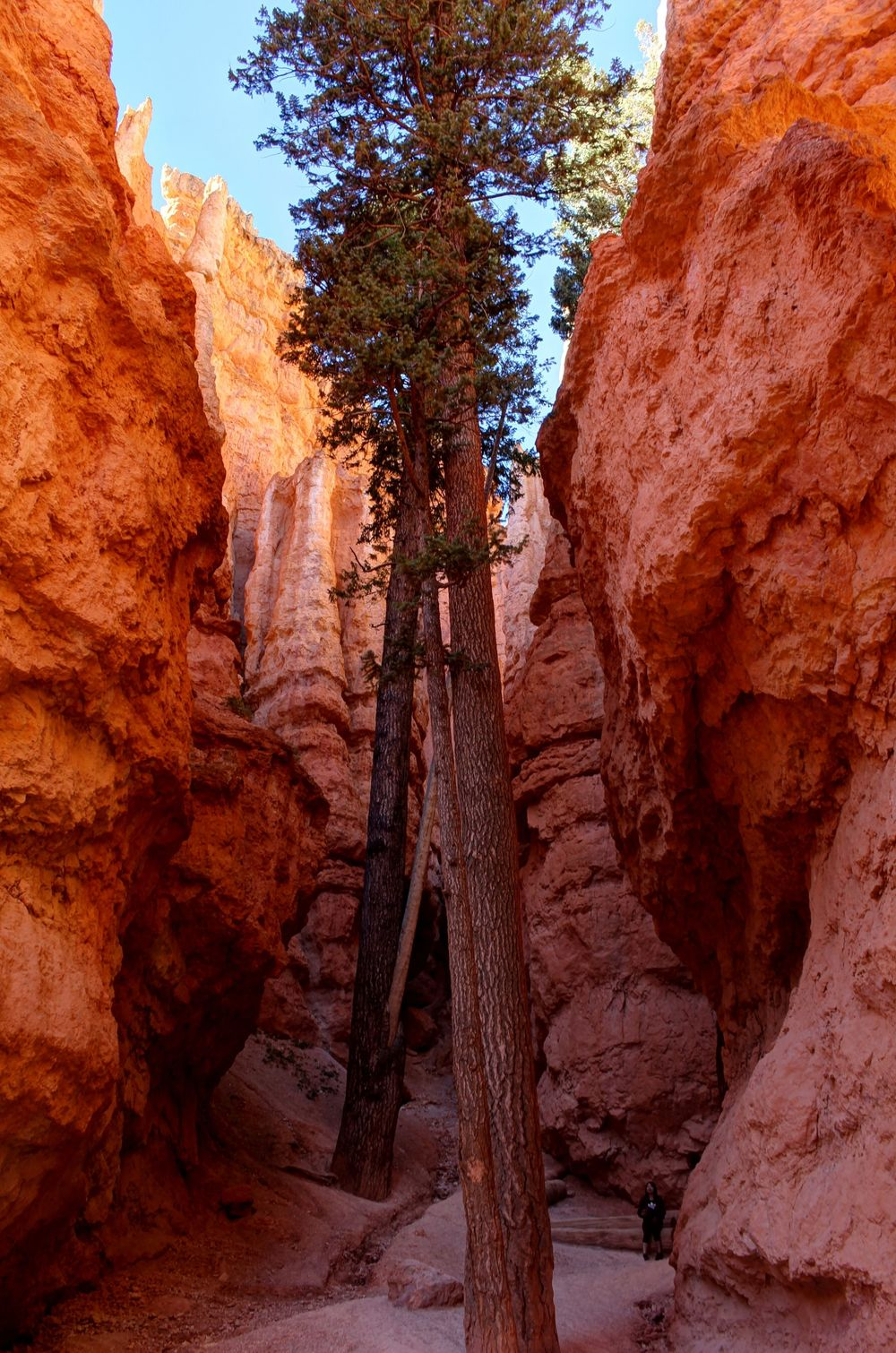Queens Garden Trail, Bryce Canyon National Park, Utah, USA