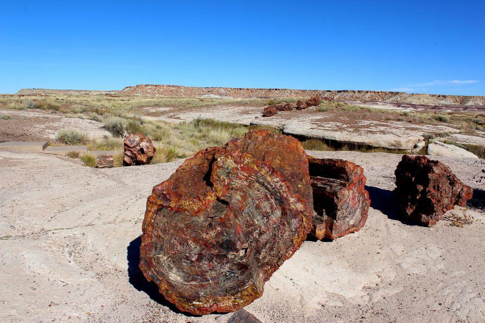 Arbre pétrifié, Petrified Forest National Park, Arizona, USA