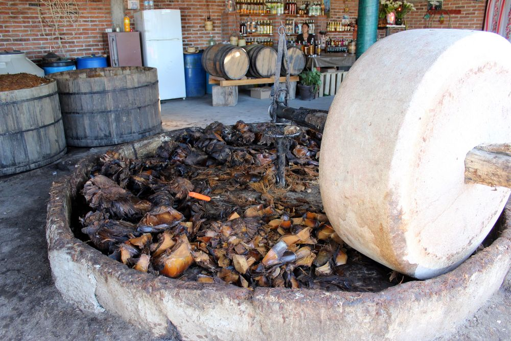 Fabrique de Mezcal sur la ruta del mezcal, Rancho Blanco, Oaxaca, Mexique