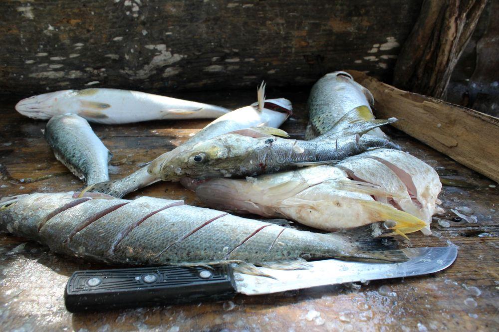 Pêche du jour, Celestùn, Yucatan, Mexico
