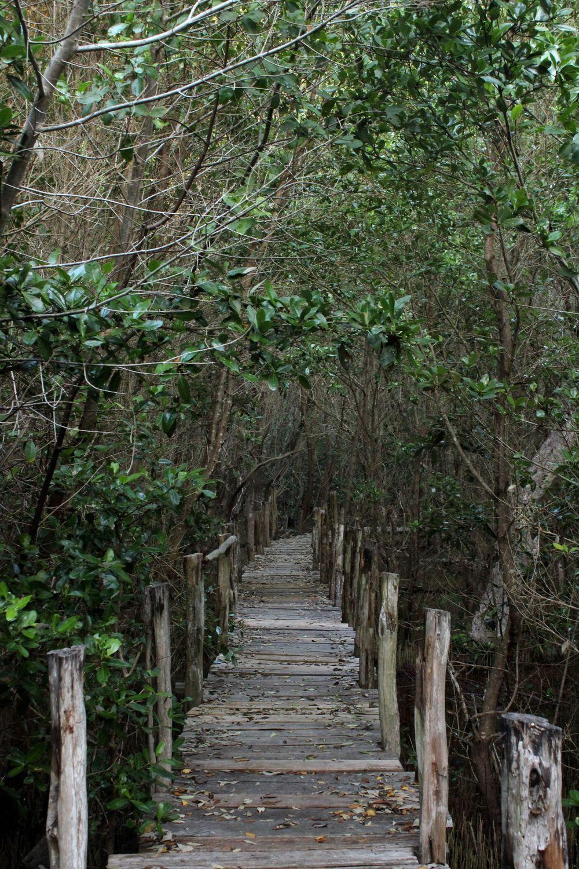 Mangrove, Celestùn, Yucatan, Mexico