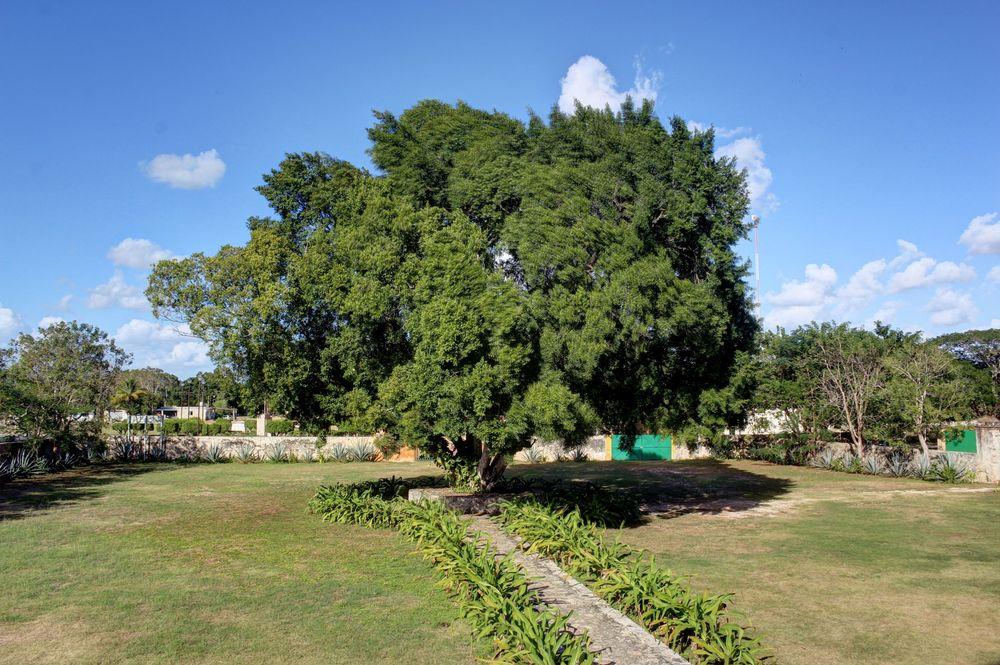 Hacienda de Yaxcopoil, Yucatán, Mexico