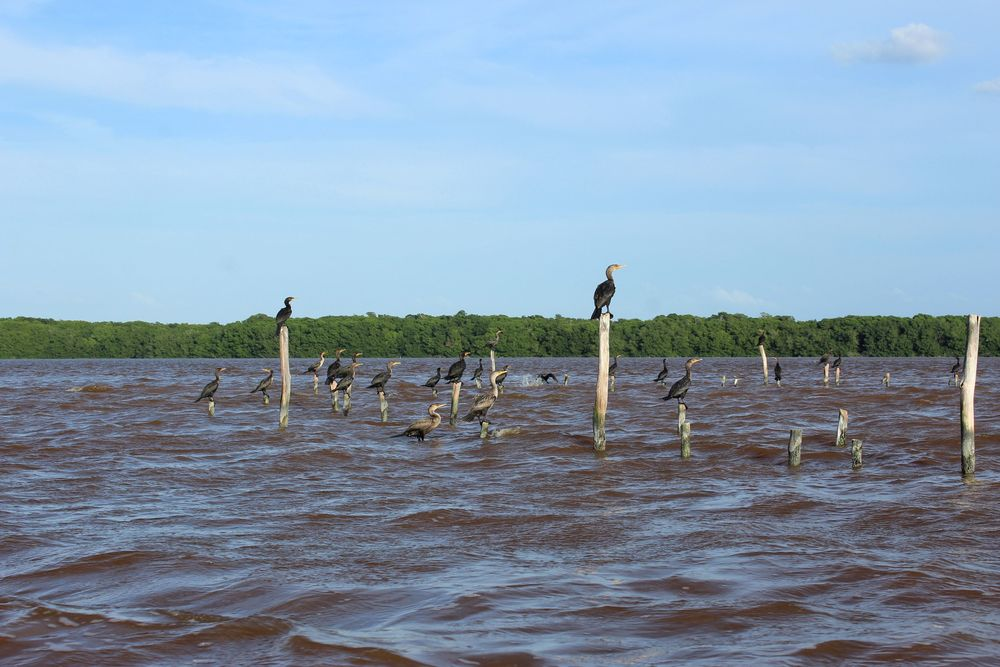 Sur le rio de Celestùn, Yucatán, Mexico