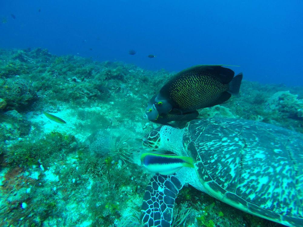 Les récifs de Cozumel, Quintana Roo, Mexico
