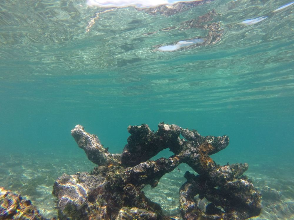 Les récifs de Mahahual, Quintana Roo, Mexico
