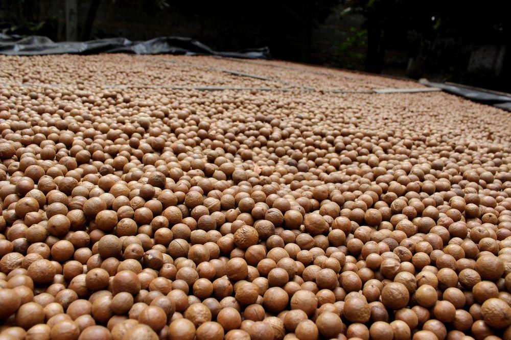 Ferme Valhalla Macadamia, Antigua, Guatemala