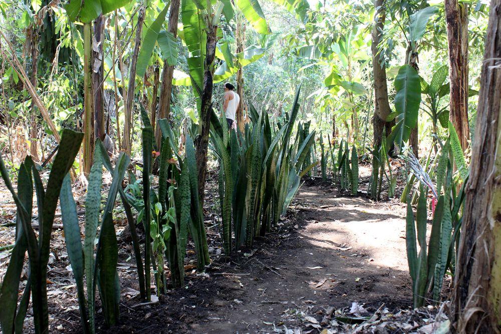 Jardin, Bubble Organic Farm, San Salvador, El Salvador