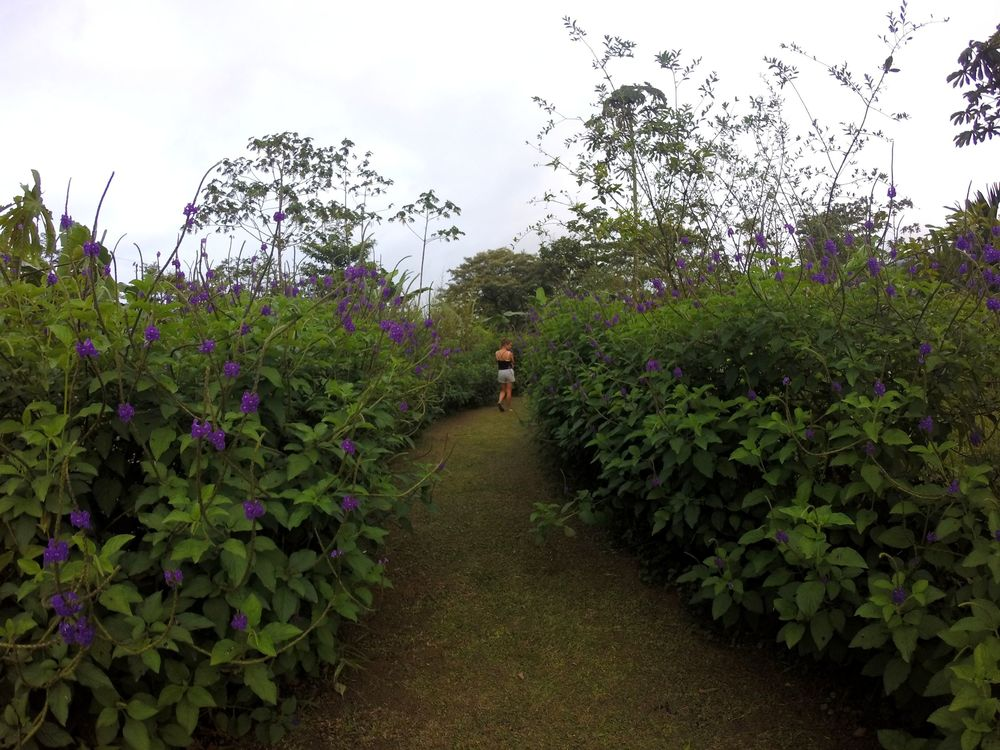 Parc National de Tenorio, Guanacaste, Costa Rica