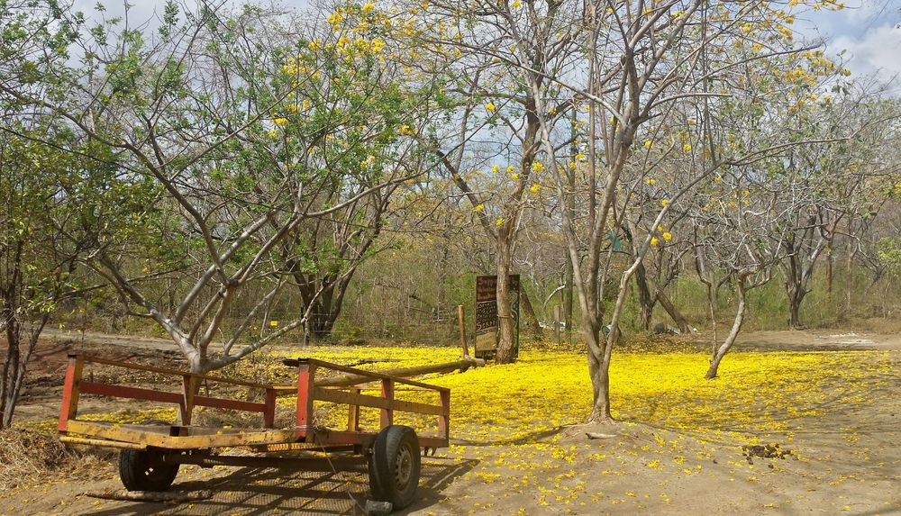 Monkey Farm, Playa Ocotal, Guanacaste, Costa Rica