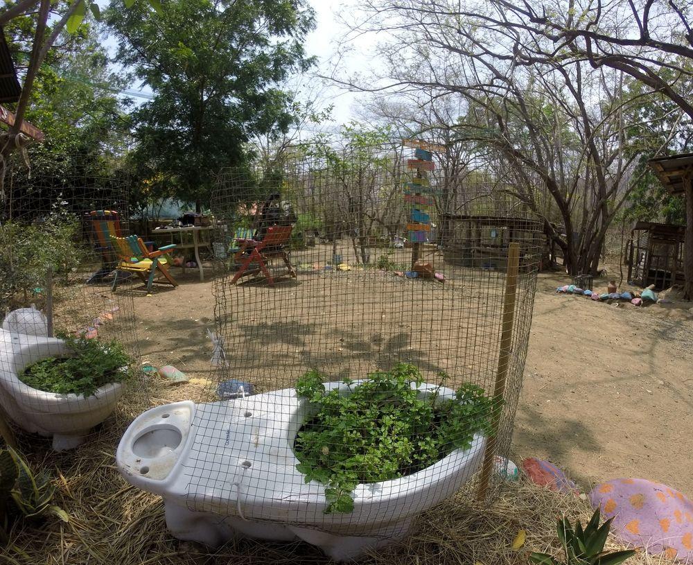 Menthe toilette, Monkey Farm, Playa Ocotal, Guanacaste, Costa Rica