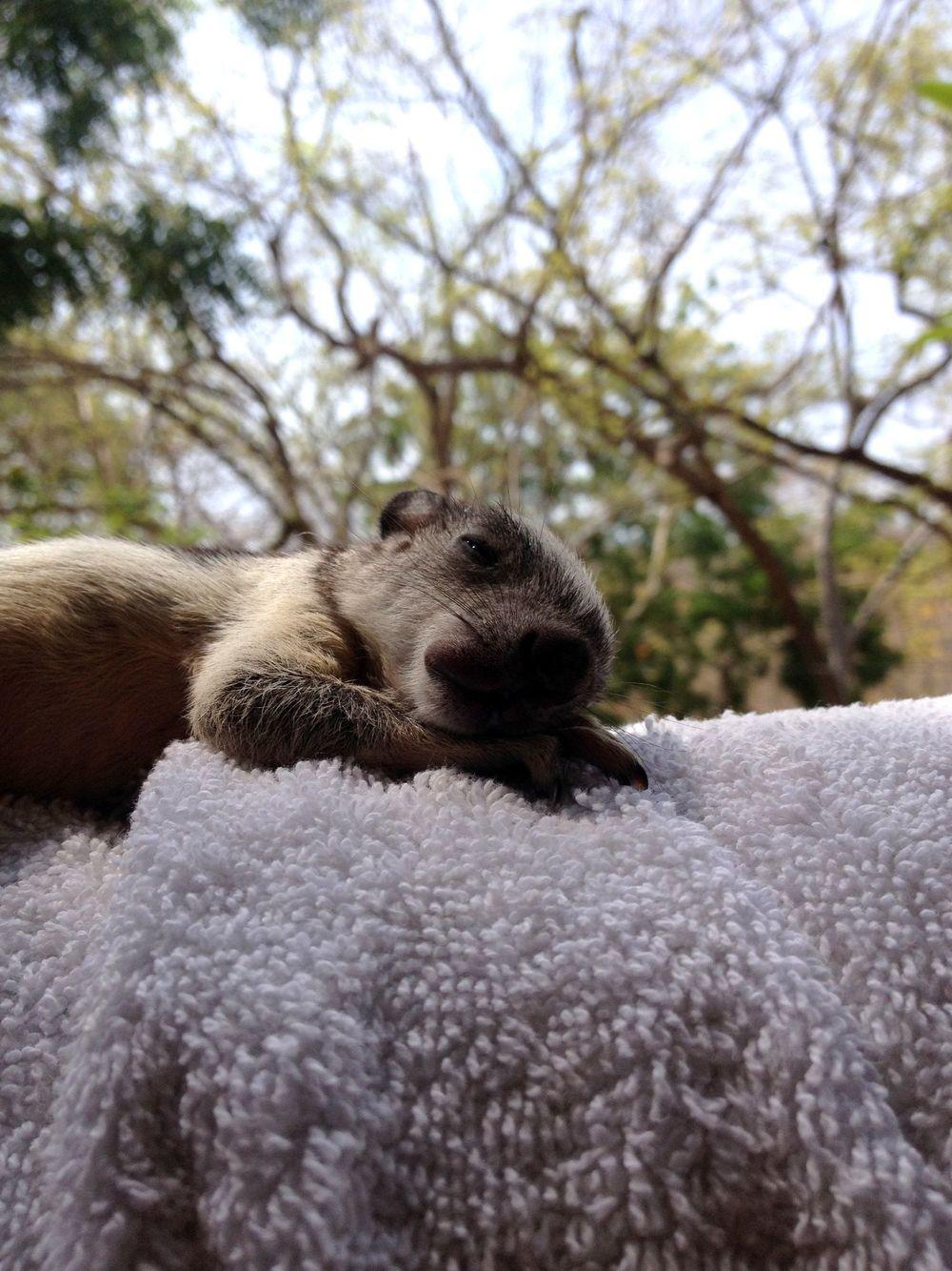 Andrès notre nouveau né écureuil, Monkey Farm, Playa Ocotal, Guanacaste, Costa Rica