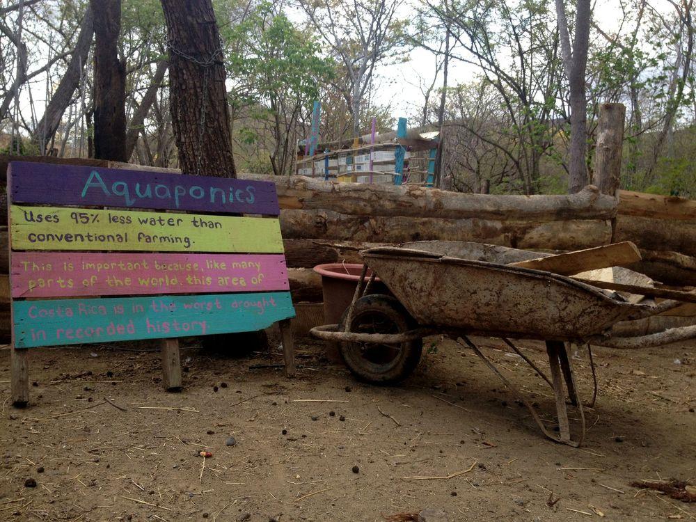 Notre projet d'aquaponie, Monkey Farm, Playa Ocotal, Guanacaste, Costa Rica