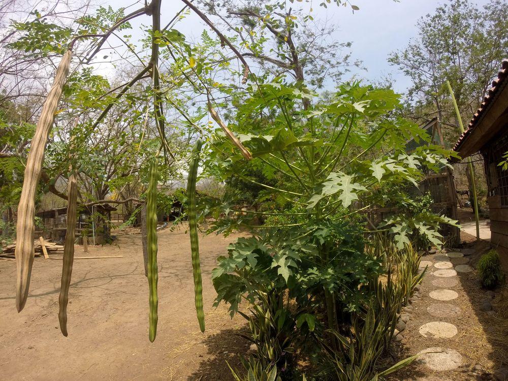 Le Moringa, Monkey Farm, Playa Ocotal, Guanacaste, Costa Rica