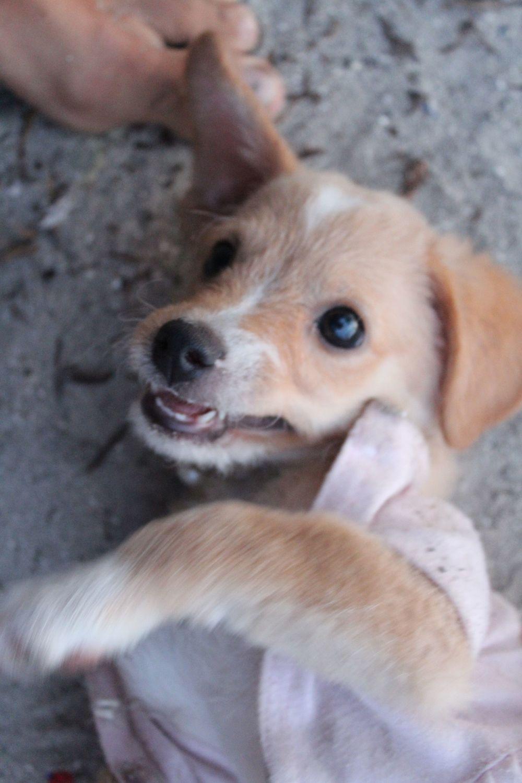 Notre animal de compagnie sur notre île, Perro Grande, San Blas, Panama