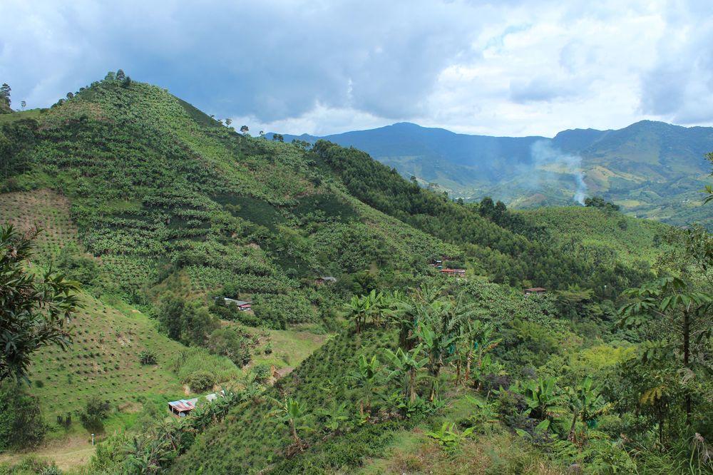 Plantation de bananinier et de café, Jardin, Antioquia, Colombie