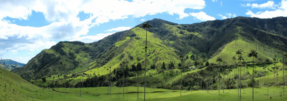 Vallée del Cocora, Quindio, Colombie