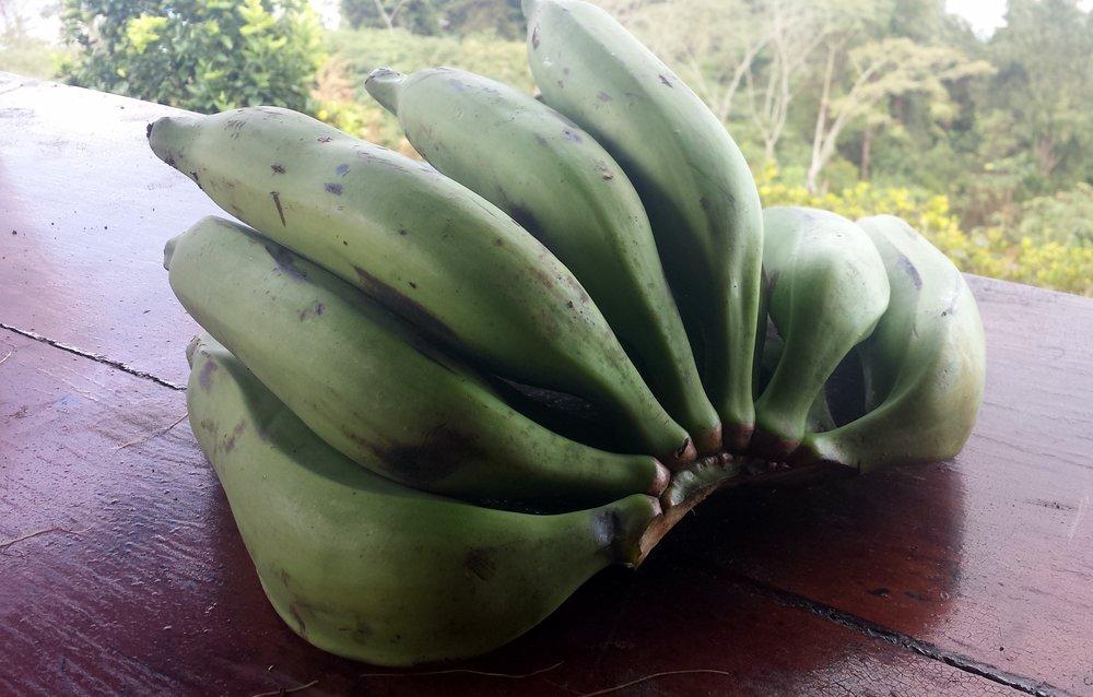 Bananes plantains vertes