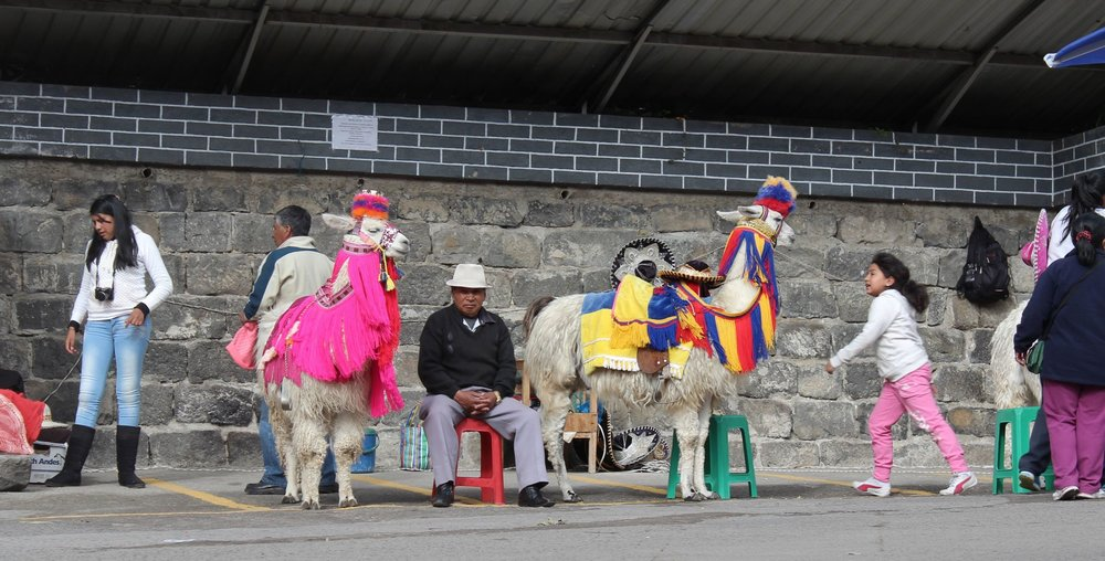 Lamas dans les rues d'Ipiales, Narino, Colombie