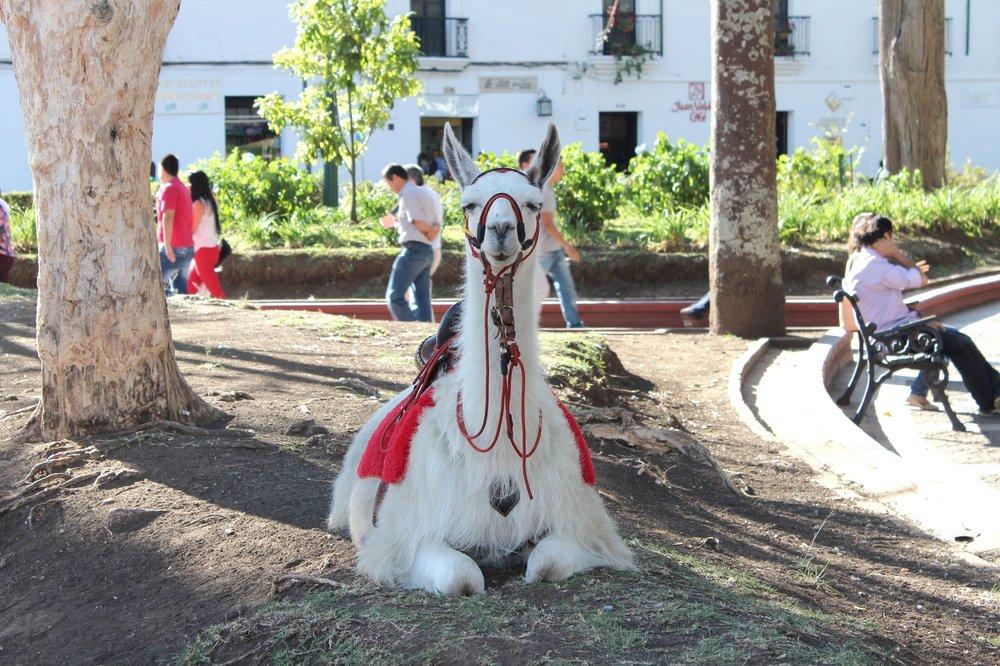 Place centrale, Popayan, Cauca, Colombie