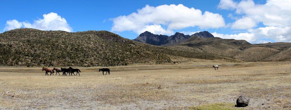 Parc national de Cotopaxi, Cotopaxi, Equateur