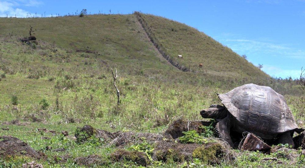 IslaSanta Cruz, Ecuador