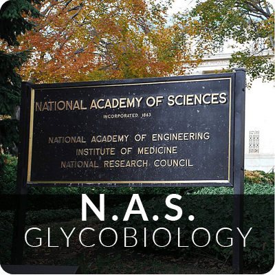 NAS_Glycobiology_c.png