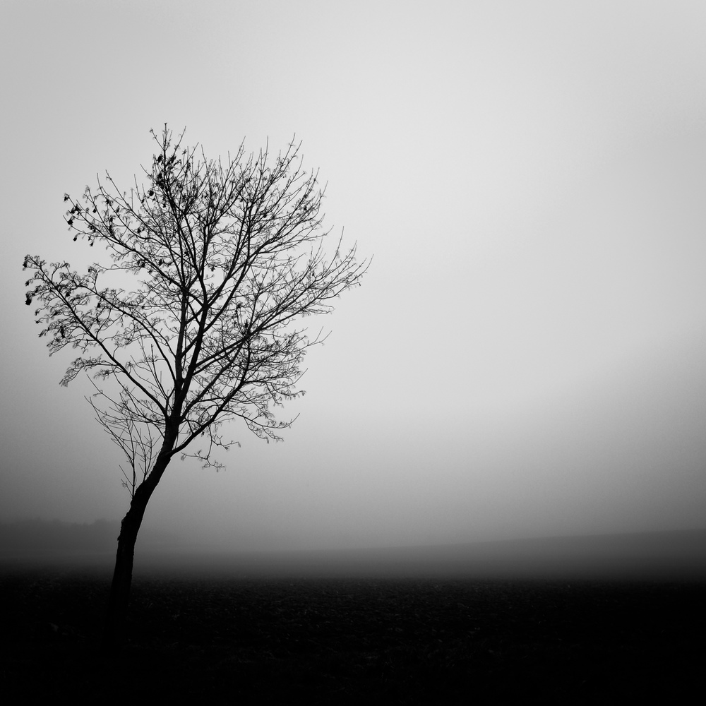 Lonesome tree on a foggy day.