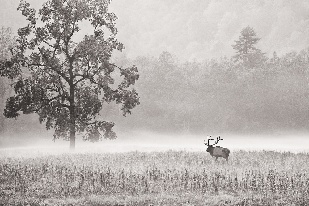 'King of the Valley' - my first real 'portfolio' quality image created back in the fall of 2010.