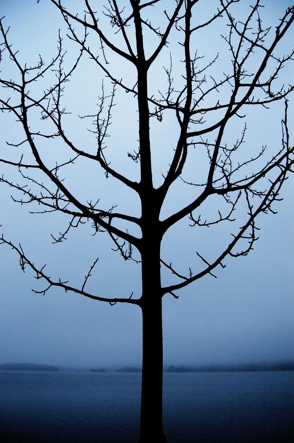 trädet.jpg