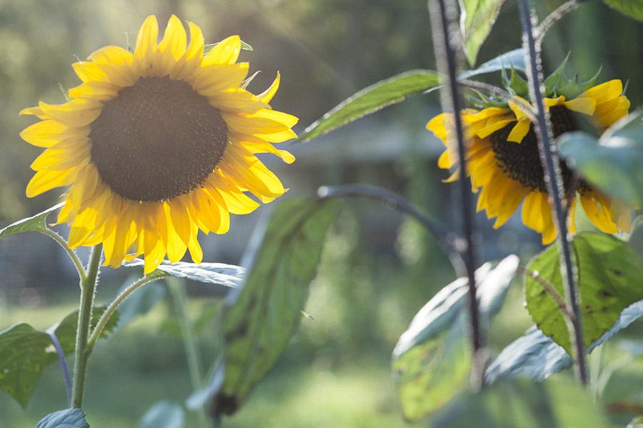 Rosegolden Flowers / Holly Carlisle Photography