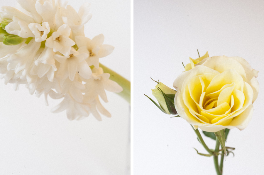 Rosegolden Flowers/Carlisle Photography