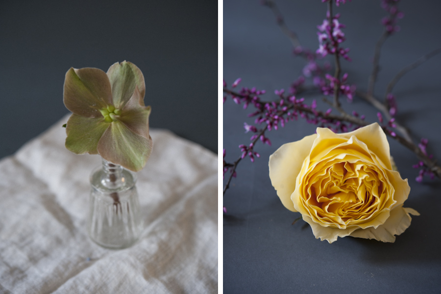 Rosegolden Flowers / Carlisle Photography