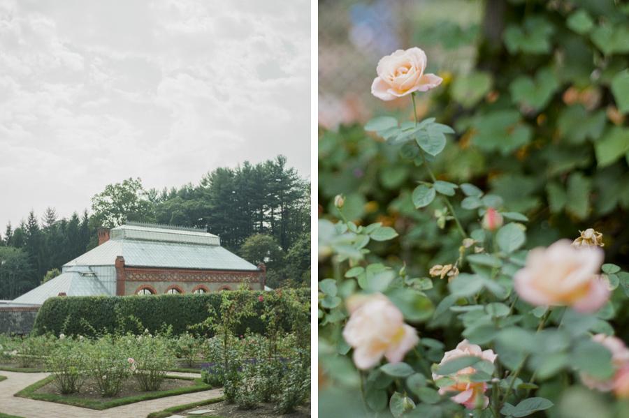 Rosegolden Flowers/Carlisle Photography