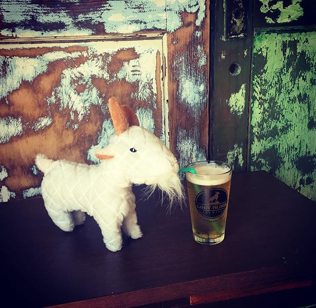 Billy gives two hooves up for our Richter's Pilsner 🐐#lifestooshorttodrinkbaaadbeer #goatislandbrewing #richterspilsner #billygoat #nobaadbeer #cullmanalabama #craftbeer #twohoovesup